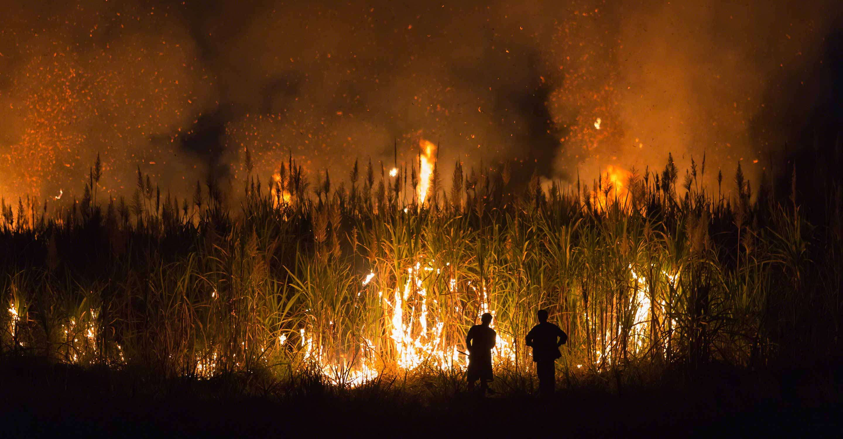 "New data exposes Thailand's 2021 ""burning season"""