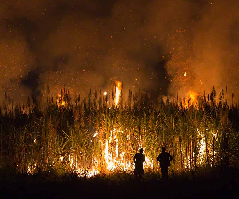 Sugarcane burned by farmer for pre-harvest in Thailand