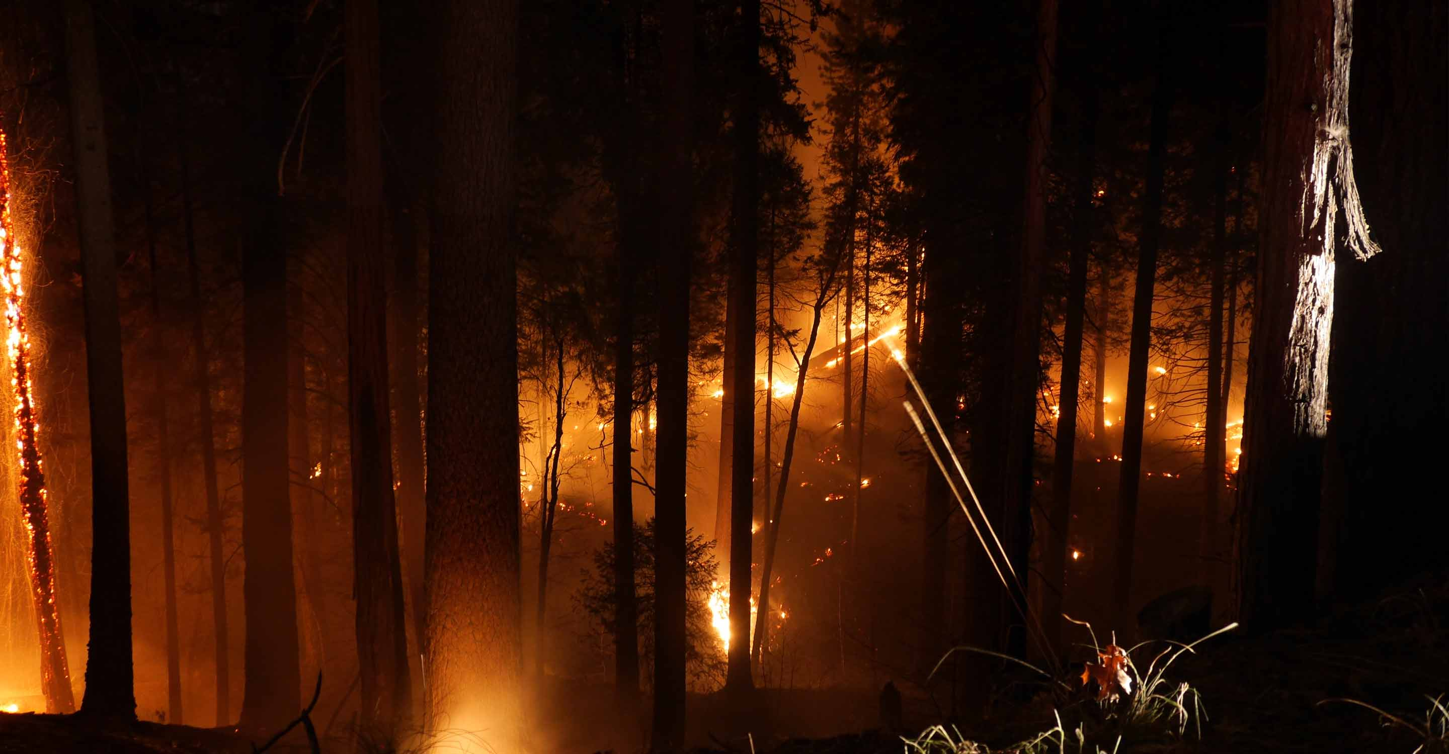 Giant sequoia groves threatened by wildfire