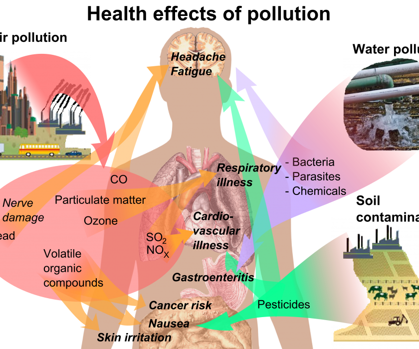 Diagram showing which pollutants affect which parts of the body