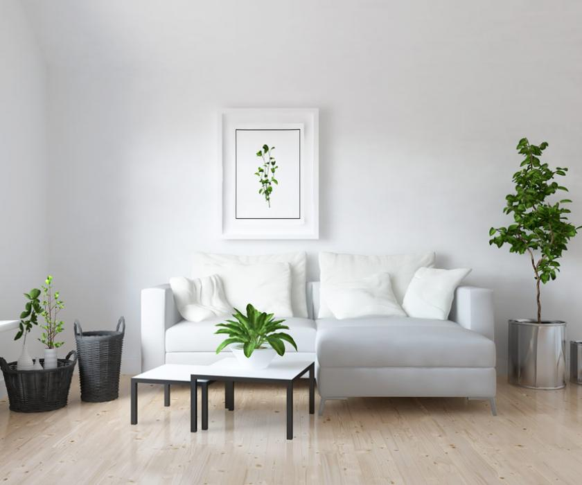 An immaculately clean room with several houseplants placed around the space.