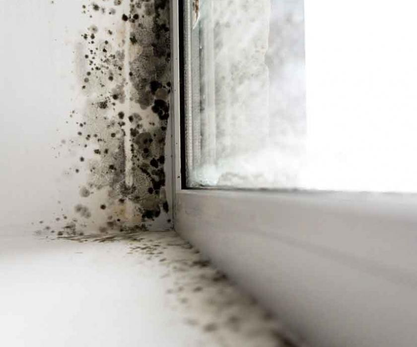 Mold growing indoors on wall