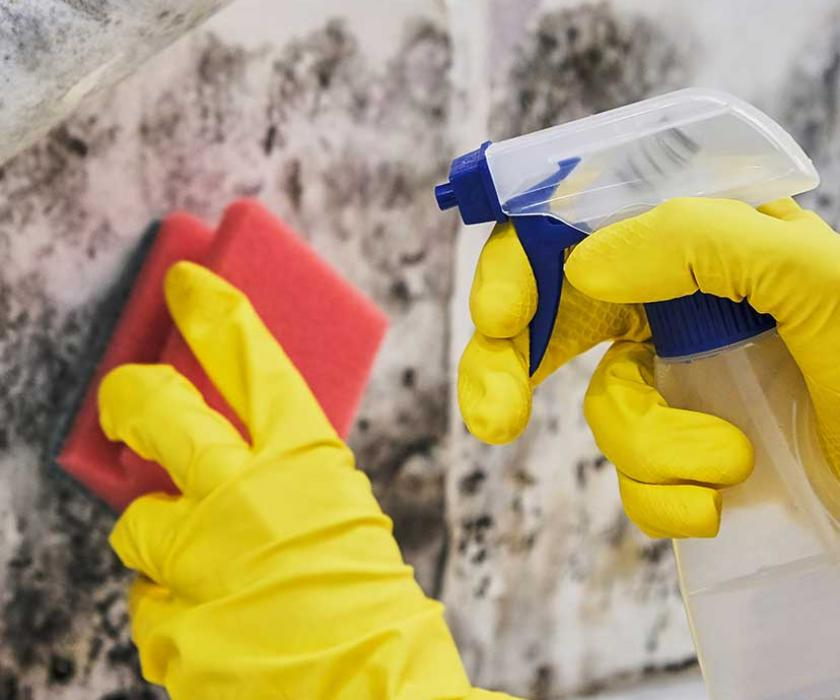 Cleaning gloves cleaning mold off of walls